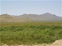 OUTSTANDING INVESTMENT! TX LAND. 40 AC., HUNTING, CAMPING. ASSUME PAYMENTS! UNLIMITED POTENTIAL!