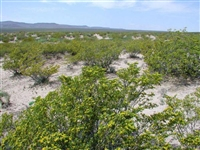 GORGEOUS NM LAND, 10 AC., LUNA COUNTY, FORECLOSURE! JUST TAKE OVER PAYMENTS!