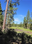 Gorgeous 10 Acre Mini Ranchette Homesite for Cabin! Cash File#6794817