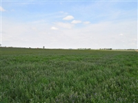 IMPRESSIVE CO LAND, 35 AC., RANCH NEAR FORECLOSURE! JUST TAKE OVER PAYMENTS!
