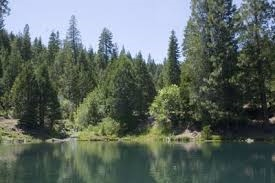 GORGEOUS CA LAND, CALIF. PINES, RECREATION OPPORTUNITIES! INCREDIBLE INVESTMENT! ASSUME PAYMENTS!