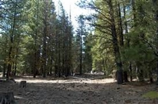 GORGEOUS CALIFORNIA LAND! 1 ACRES IN CALIFORNIA PINES, TAKE OVER PAYMENTS!