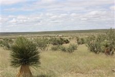 20 ACRE RANCH WAS $19,995 NOW NO RESERVE CASH SALE! GREAT INVESTMENT!  FILE # 1279015 (Vault T)