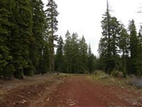 Approxmately 1 Acre! Gorgeous California Pines Subdivision, Northern California!!! Just Bid and Take Over Payments!!!