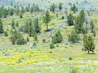 1.02 Acres!!! Gorgeous California Pines Subdivision, Northern California!!! Just Bid and Take Over Payments!!!
