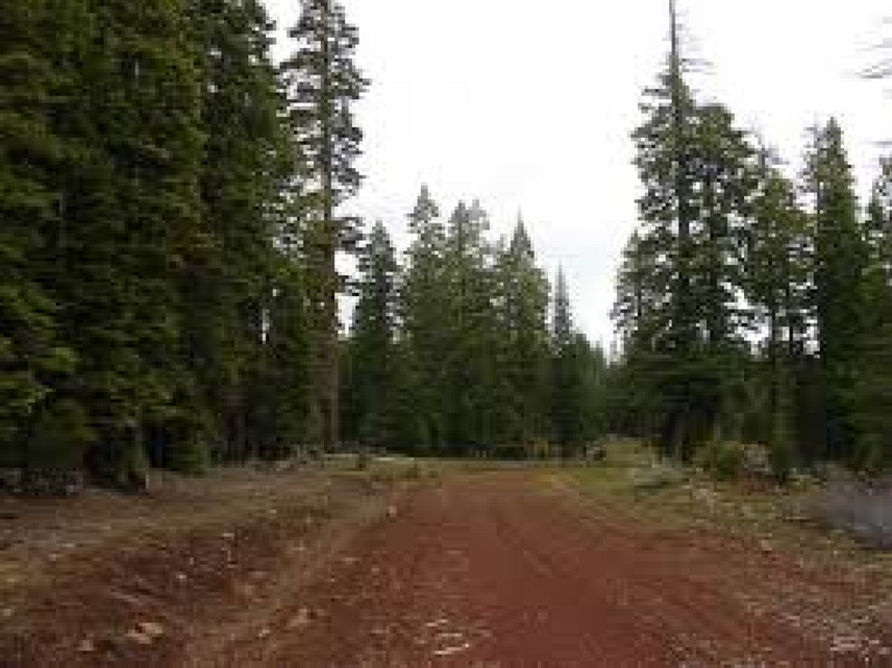 1.36 Acres!! Gorgeous California Pines Subdivision, Northern California!! Just Bid and Take Over Payments!!!!