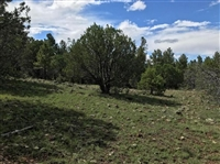 GORGEOUS AZ LAND, 10 AC., RANCHETTE-APACHE! INCREDIBLE INVESTMENT! ASSUME PAYMENTS!